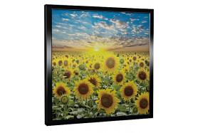 Glas-Bildheizung Flowers-Schwarz 300 W